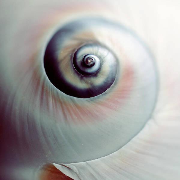 Photograph - Close Up Of Spiral Shell by Lisa Sieczka