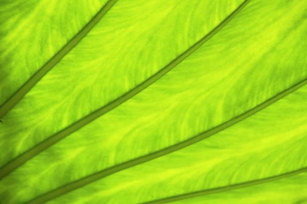 Okinawa Photograph - Close-up Of Surface Of A Green Leaf by Daisuke Morita