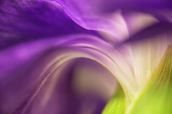 Carnation Photograph - Close-up Of The Back Of A Purple by Rona Schwarz