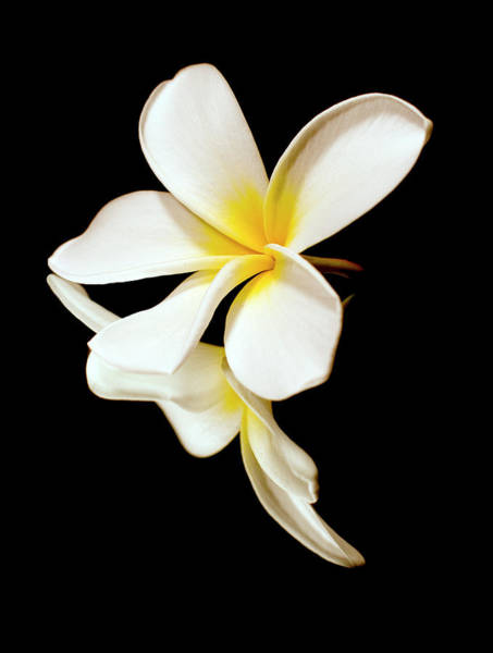 Wall Art - Photograph - Close Up Of The White Petals by Scott Mead