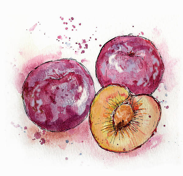 Wall Art - Painting - Close Up Of Three Plums by Ikon Ikon Images