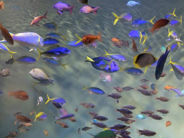 Fish Tank Photograph - Close-up Of Tropical Fish At Miyajami by Panoramic Images