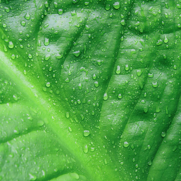 Washington Square Park Wall Art - Photograph - Close Up Of Water Drops On Lush, Green by Mint Images - Paul Edmondson