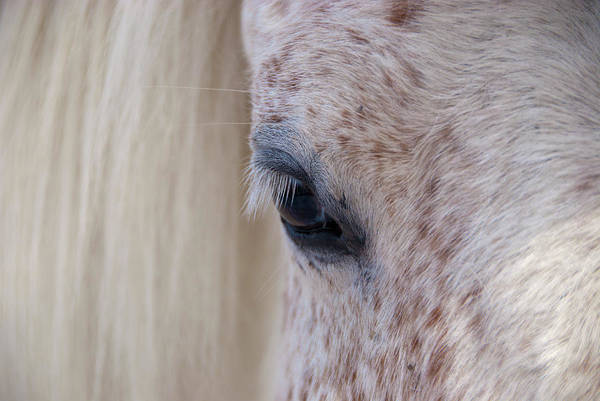 Free Range Photograph - Close-up Of White-brown Spotted Horse by Martin Moos