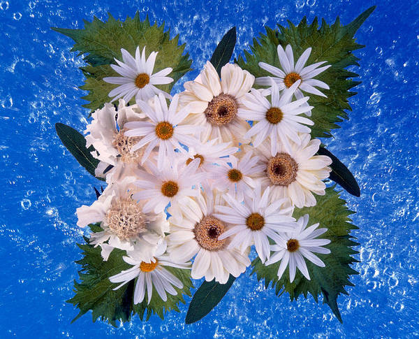 Mottled Wall Art - Photograph - Close Up Of White Daisy Bouquet by Panoramic Images