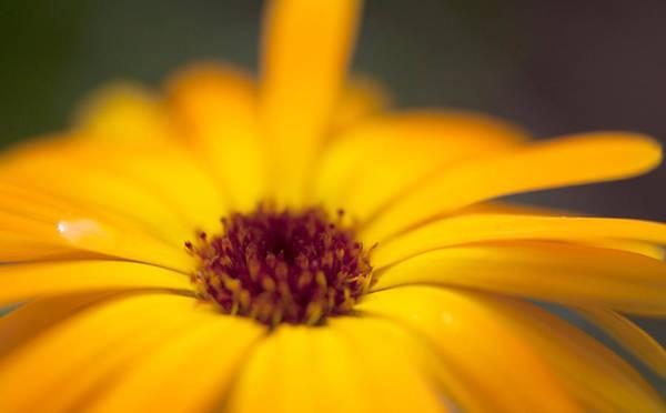 Close-up Of Yellow Flower Art Print by Paulien Tabak / EyeEm