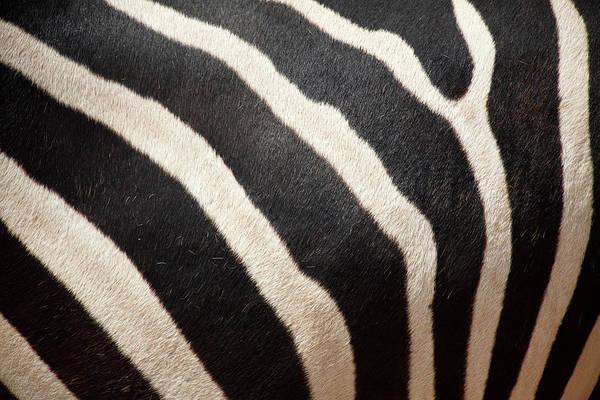 Horizontal Stripes Photograph - Close Up Of Zebra Stripes by Massimo Pizzotti