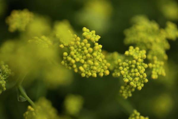 Hessen Photograph - Closeup Of A Yellow Plant. Rhoen by Sebastian Kujas