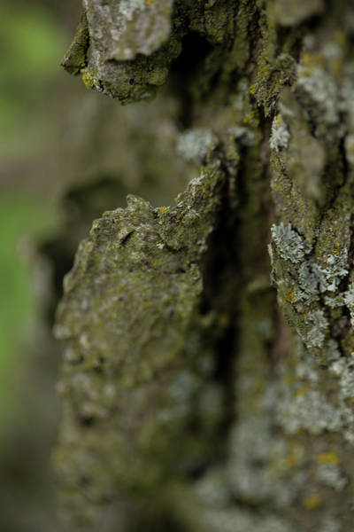 Wall Art - Photograph - Closeup Of Bark Covered In Lichen by Sebastian Kujas