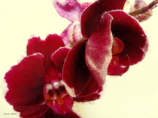 Digital Art - Closeup Of Flowering Burgundy Orchid by Susan Schroeder