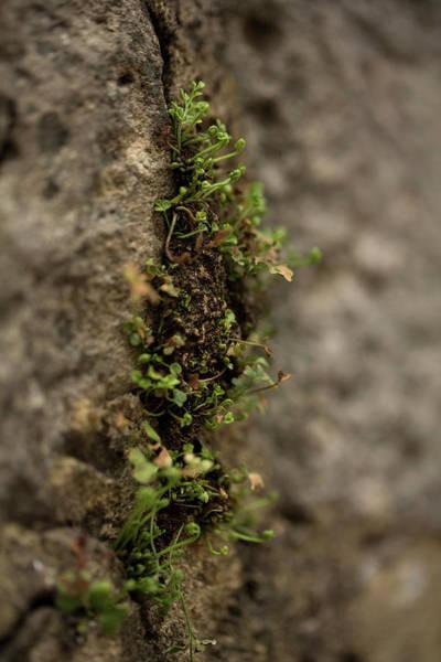 Hessen Photograph - Closeup Of Vegetation On A Stone Wall by Sebastian Kujas