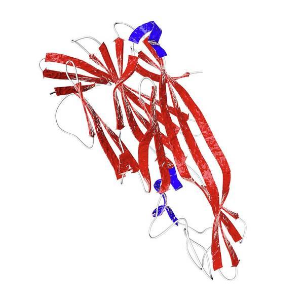 Clostridium Delta Toxin Art Print
