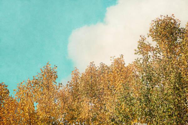 Photograph - Cloud And Birches by Ari Salmela