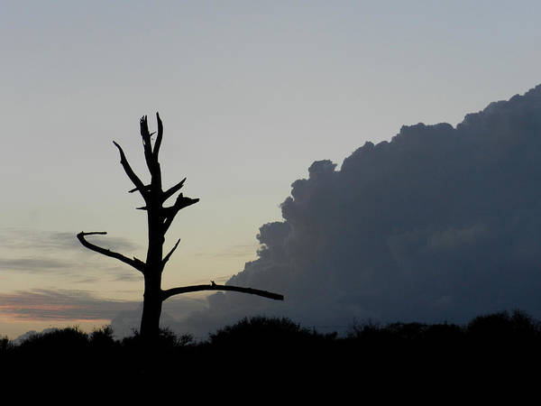 Photograph - Cloud And Tree by Grace Dillon