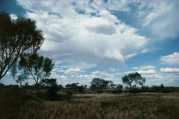 Cumulus Photograph - Cloud With Rain Evaporating Before Reaching Ground by Gordon Garradd/science Photo Library