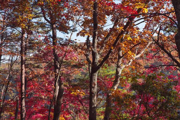 Cloudland Canyon Photograph - Cloudland Canyon Fall Colors by John M Bailey