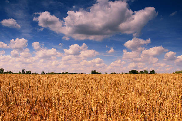 Photograph - Clouds Above The Wheat by Rachel Cohen