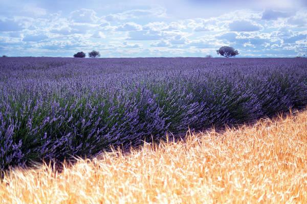 Paisaje Photograph - Clouds Over Lavender Plantation by David Santiago Garcia