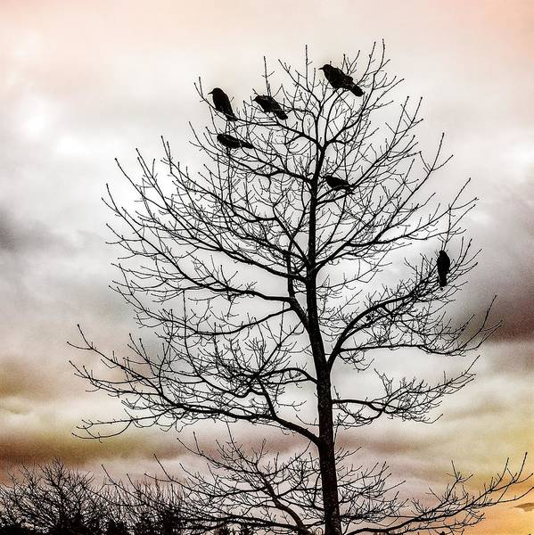 Photograph - Cloudy Day Blackbirds by Roxy Hurtubise