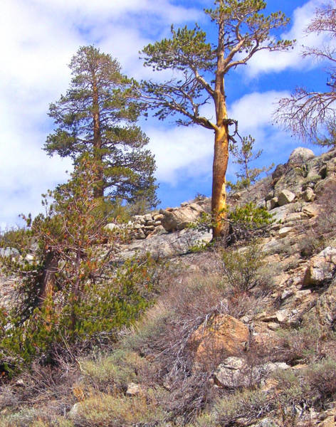 Bishop Hill Photograph - Cloudy Spring by Marilyn Diaz