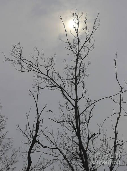 Photograph - Cloudy Winter Morning by Karen Adams