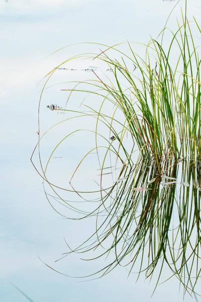 Wall Art - Photograph - Clump Of Grass Reflected On Red Jack by Adam Jones