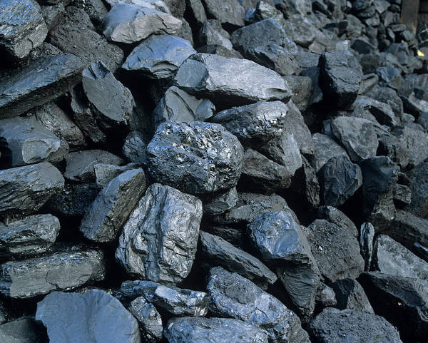 Fossil Fuel Photograph - Coal by Martin Bond/science Photo Library