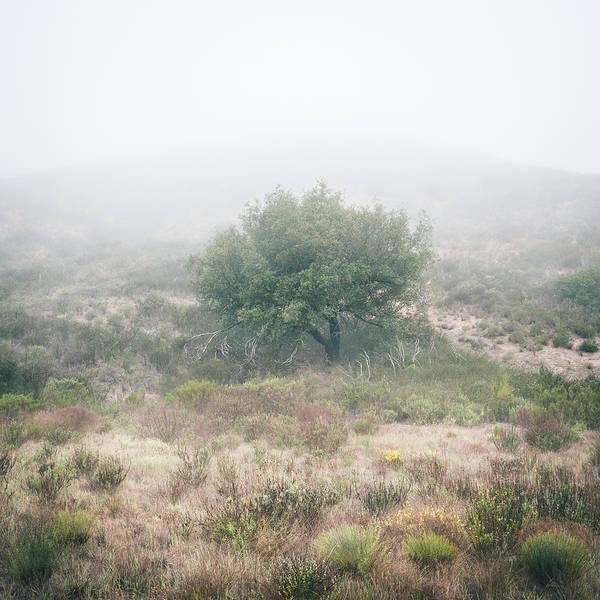 Photograph - Coast Live Oak In Morning Fog by Alexander Kunz