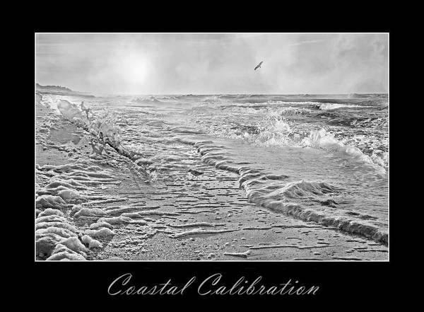 Shore Bird Digital Art - Coastal Calibration by Betsy Knapp