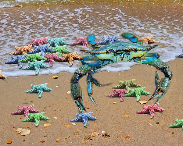 Wall Art - Digital Art - Coastal Crab Collection by Betsy Knapp