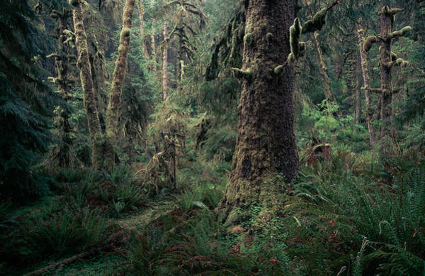 Photograph - Coastal Forest 3 by Alexander Kunz