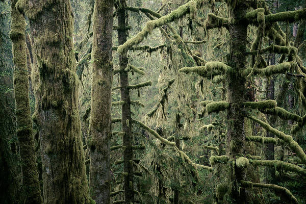 Photograph - Coastal Forest by Alexander Kunz