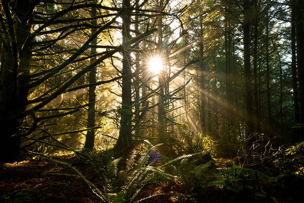 Photograph - Coastal Forest by Andrew Kumler