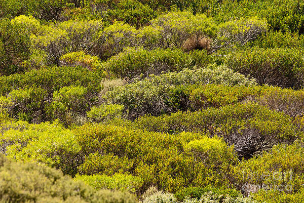 Photograph - Coastal Greens by Rick Piper Photography
