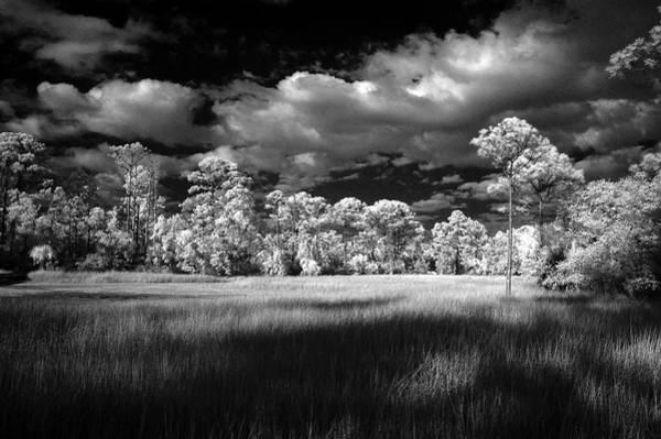 Sawgrass Digital Art - Coastal Marsh Walkway by Gregory W Leary