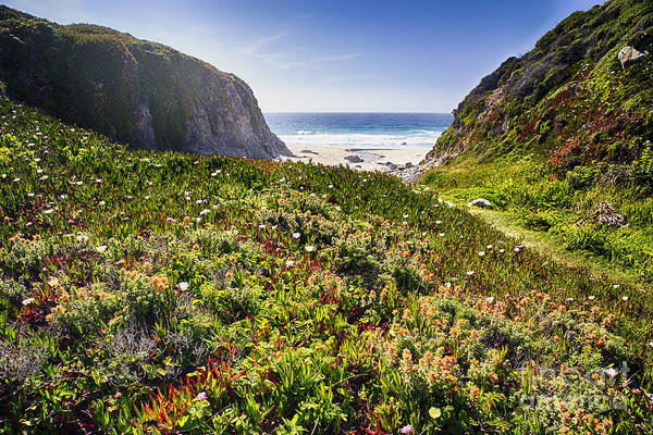 Wall Art - Photograph - Coastal Meadow In Big Sur by George Oze