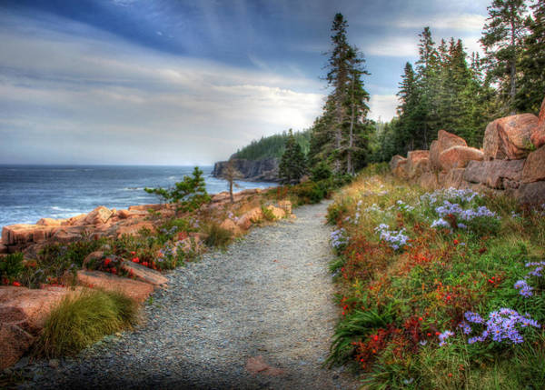 Acadia National Park Wall Art - Photograph - Coastal Meandering by Lori Deiter