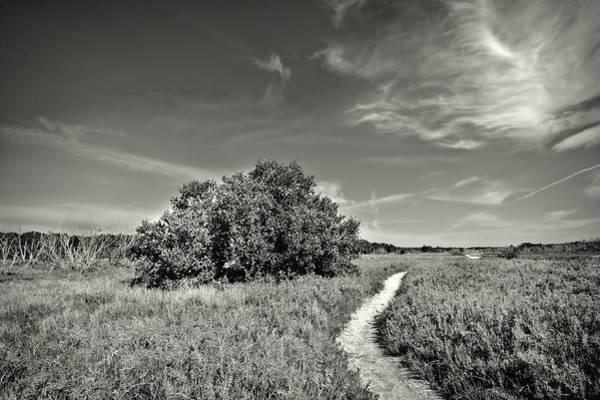 Photograph - Coastal Prairy Bw by Rudy Umans
