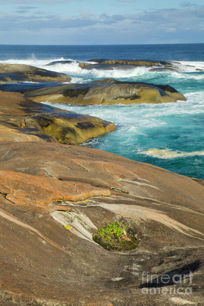 Photograph - Coastal Rocks Along William Bay by Yva Momatiuk John Eastcott