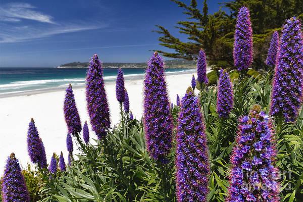 Wall Art - Photograph - Coastal Wildflower Bloom by George Oze