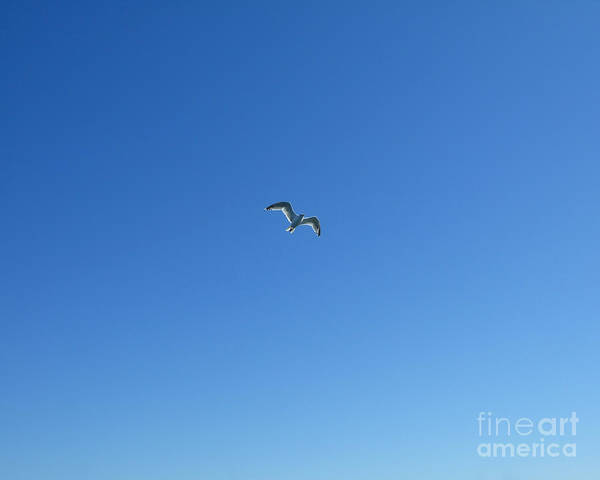 Photograph - Coasting Seagull by Kristen Fox