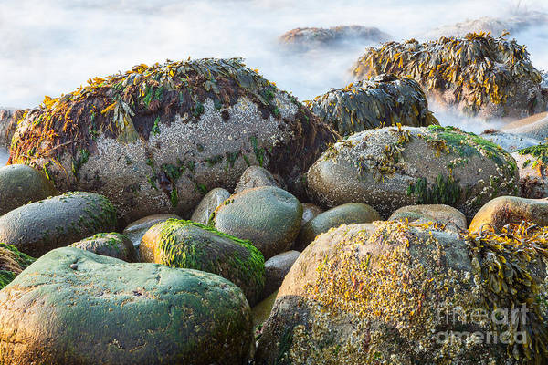 Photograph - Cobblestone Beach by Susan Cole Kelly