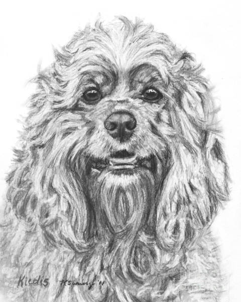 Photograph - Cocker Spaniel Detail by Kate Sumners