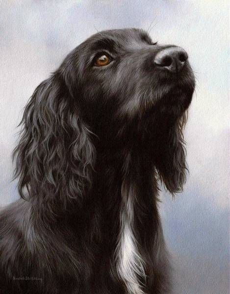 Cocker Spaniel Painting - Cocker Spaniel Painting by Rachel Stribbling