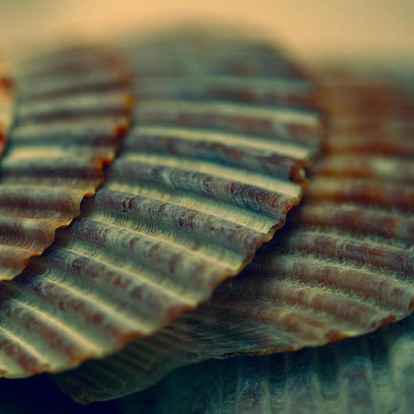 Oregon Ridge Photograph - Cockle Shells by Bonnie Bruno