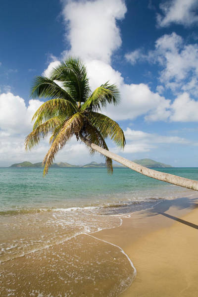 St Kitts Photograph - Coconut Grove Beach At Cades Bay, With by Greg Johnston