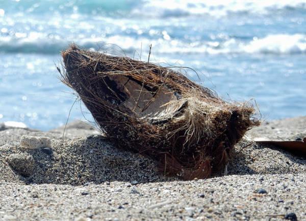 Photograph - Coconut Husk by Pamela Walton