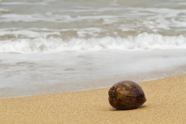 Photograph - Coconut On The Beach - Kilauea - Kauai - Hawaii by Belinda Greb