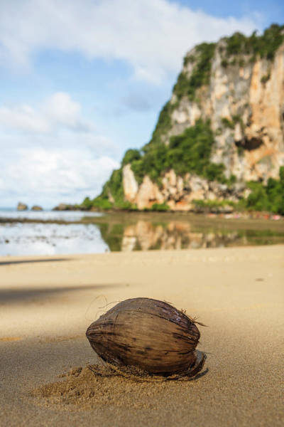 Wall Art - Photograph - Coconut, Railay Beach, Krabi, Thailand by Steele Burrow