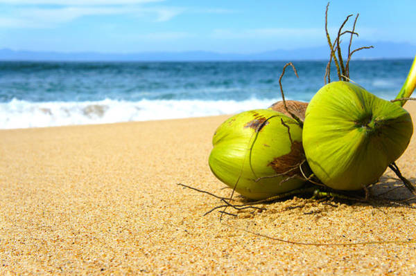 Coconut Trees Photograph - Coconuts by Aged Pixel